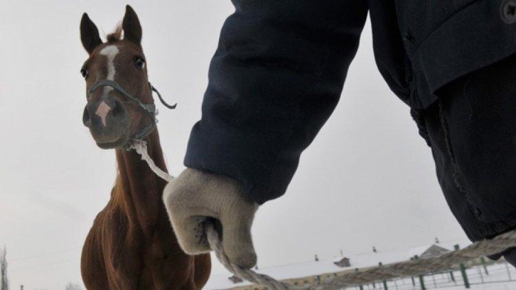 ВАргаяшском районе схвачен  похититель табуна лошадей